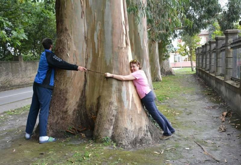 Abraza los árboles